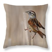 Swamp Sparrow Pictures 17 Throw Pillow