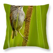 Swamp Sparrow Pictures Throw Pillow