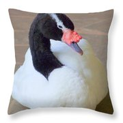 Swan At Rest Throw Pillow