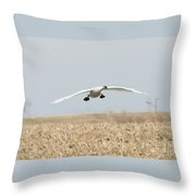Swan Coming In For A Landing Throw Pillow