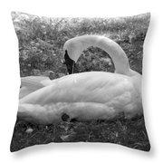 Swan Nap Throw Pillow