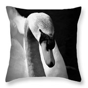 Swan Of Plymouth Throw Pillow