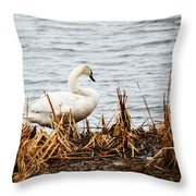 Swan On Shore Throw Pillow
