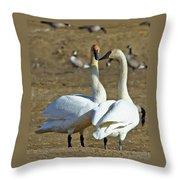 Swan Pair Throw Pillow