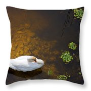 Swan With Sun Reflection On Water. Throw Pillow