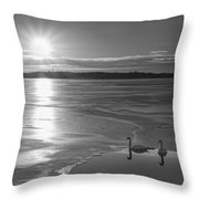 Swans Sunrise Bw Throw Pillow