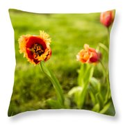Swaying On A Breeze Throw Pillow