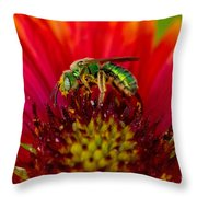 Sweat Bee Collecting Pollen Throw Pillow