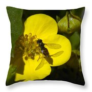 Sweat Bee Throw Pillow