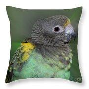 Sweet Baby Meyers Parrot Throw Pillow