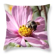 Sweet Bee On Pink Cosmos Throw Pillow