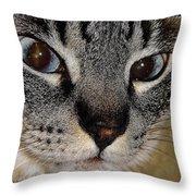 Cat - Sweet - Boy Throw Pillow