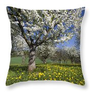 Sweet Cherry Orchard In Full Bloom Throw Pillow