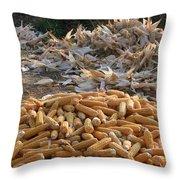 Sweet Corn And Husks Throw Pillow