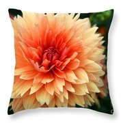 Sweet Dahlia Throw Pillow