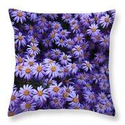 Sweet Dreams Of Purple Daisies Throw Pillow