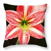 Sweet Lillian Amaryllis Throw Pillow