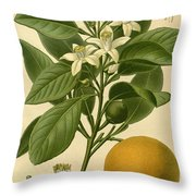 Sweet Orange Throw Pillow by Philip Ralley