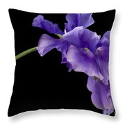 Sweet Pea Study Throw Pillow by Anne Gilbert