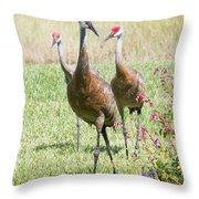 Sweet Sandhill Crane Family Throw Pillow