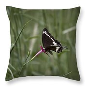 Sweet Seduction Throw Pillow