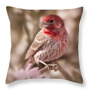 Sweet Songbird Throw Pillow