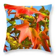 Sweetgum Leaves In Autumn Throw Pillow