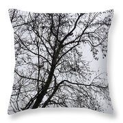 Sweetgum Silhouette On A Rainy Day Throw Pillow