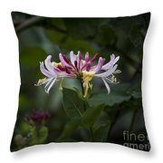 Sweetly Scented. Throw Pillow