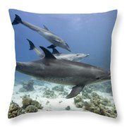 swimming Bottlenose dolphins Throw Pillow