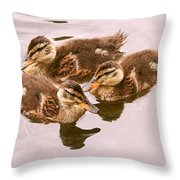 Swimming Ducklings Throw Pillow