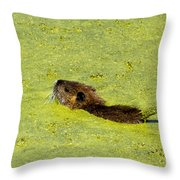 Swimming In Pea Soup - Baby Muskrat Throw Pillow