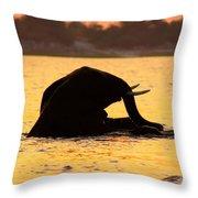 Swimming Kalahari Elephants Throw Pillow