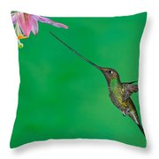 Sword-billed Hummer Throw Pillow