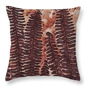 Sword Fern Fossil Throw Pillow by Katherine Young-Beck