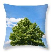 Sycamore  Acer Pseudoplatanus Throw Pillow