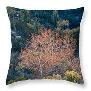 Sycamore And Saguaro Cacti, Arizona Throw Pillow