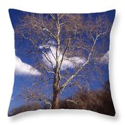 Sycamore On The Hill Throw Pillow