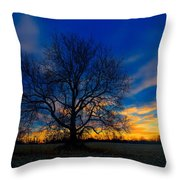 Sycamore Sunset Throw Pillow