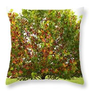 Sycamore Tree Throw Pillow