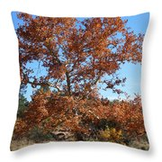 Sycamore Tree In Fall Colors Throw Pillow
