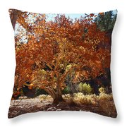 Sycamore Trees Fall Colors Throw Pillow