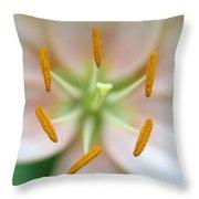Symmetrical Flower Closeup Throw Pillow
