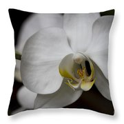Symphony White Orchid Throw Pillow