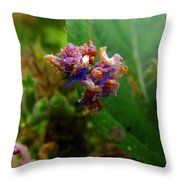 Synchlora Aerata Caterpillar 2 Throw Pillow