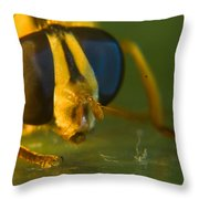 Syrphid Eyes And Antennae Throw Pillow