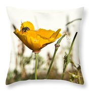 Syrphid Fly And Poppy 2 Throw Pillow
