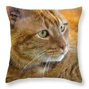 Tabby Cat Portrait Throw Pillow