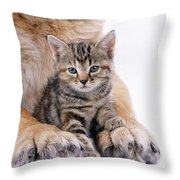 Tabby Kitten Between Large Dogs Paws Throw Pillow