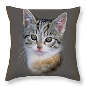 Tabby  Kitten An Original Painting For Sale Throw Pillow